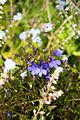 NZ FLOWERS -0674 (7769564460).jpg