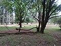 Nairobi Arboretum Park 13.JPG