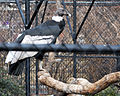 National Aviary (13020407724).jpg