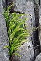 Natural rockery - geograph.org.uk - 866561.jpg