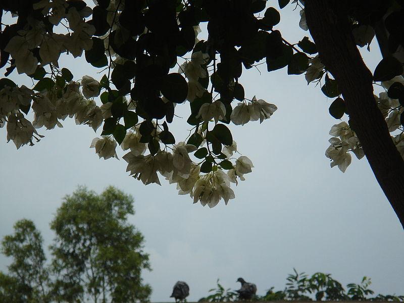 File:Nature.JPG