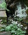 Nature Reserve Pavlino údolí 1.jpg