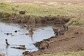 Nature of Ngorongoro Conservation Area (100).jpg