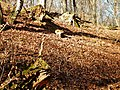Naturpark Schönbuch - panoramio (8).jpg