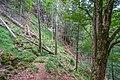 Naturschutzgebiet Feldberg (Black Forest) - Alpiner Steig am Feldberg - Bild 08.jpg