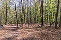 Naturschutzgebiet Königsdorfer Forst-7288.jpg