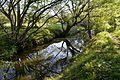 Naturschutzgebiet Mittleres Innerstetal mit Kanstein - Innerste bei Grasdorf (13).JPG