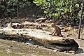 Negombo Lagoon Wildlife.jpg