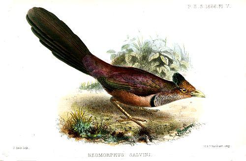 500px neomorphussalvinismit