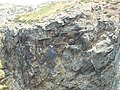 Nesting gulls on the cliffs opposite Ynys y Fydlyn - geograph.org.uk - 1374784.jpg
