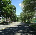 New Providence NJ leafy street with playfield on right.jpg