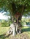 Wegkruis, bevestigd aan een oude boom