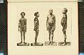 Nova Guinea - Vol 3 - Plate 46.jpg