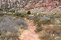 Oak Creek Canyon trail 2.jpg