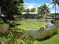 Oasis Pool, Pacific Harbour, Fiji - panoramio.jpg