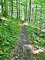 Oberschwaben Schwäbischer Alb Weg (HW7) - panoramio.jpg