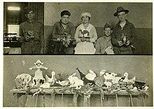 Terapia occupazionale applicata in un ospedale psichiatrico agli inizi del XX secolo.