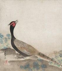Pheasant (1997.110)