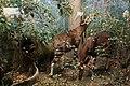 Okapi (21878394939).jpg