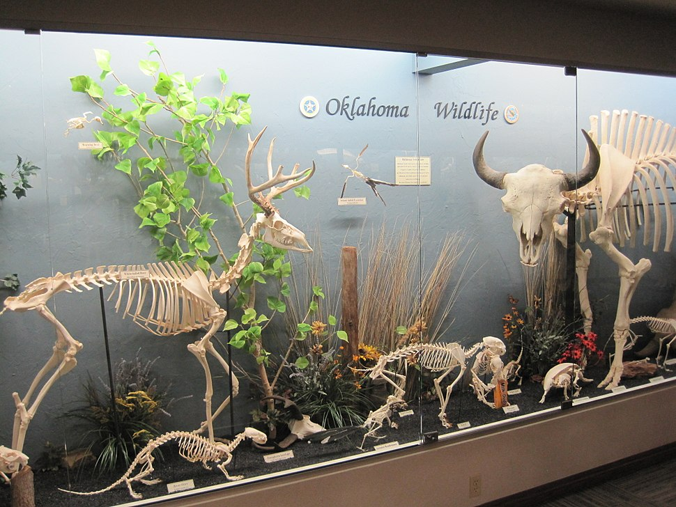 Oklahoma wildlife exhibit at the museum of osteology
