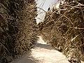 Old road - panoramio.jpg