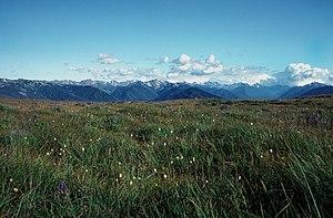 Daniel J. Evans Wilderness - From Hurricane Ridge