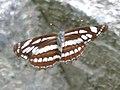 Open Wings (17881104555).jpg
