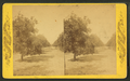 Orange Grove, Sanford, Florida, from Robert N. Dennis collection of stereoscopic views.png