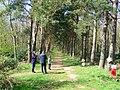 Orienteering in Binning Wood. - geograph.org.uk - 5725.jpg