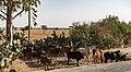 Oromia IMG 5098 Ethiopia (25712599588).jpg