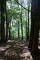 Osbecks bokskogar - KMB - 16001000180384.jpg