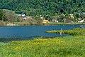 Ossiach Alt-Ossiach Bleistätter Moor Wasserflächen Sumpfwiesen 23052019 6981.jpg