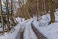 Pörtschach Winklern Brockweg Waldrand 14012021 0352.jpg
