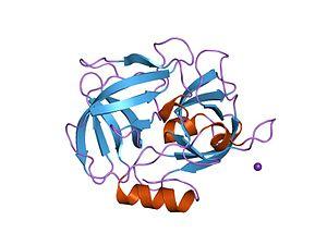 Glutamyl endopeptidase GluV8 - Image: PDB 1qy 6 EBI