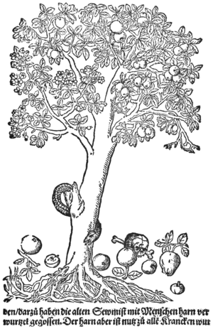 Ciencia 300px-PSM_V70_D503_Showing_the_apple_tree_and_variations_of_it