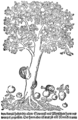 PSM V70 D503 Showing the apple tree and variations of it.png