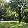 Pałac Tyszkiewiczów i park w Pogorzeli.jpg