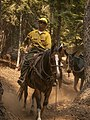 Packer on Klamath National Forest (16368413451).jpg