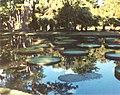 Pampelmousse garden - panoramio.jpg