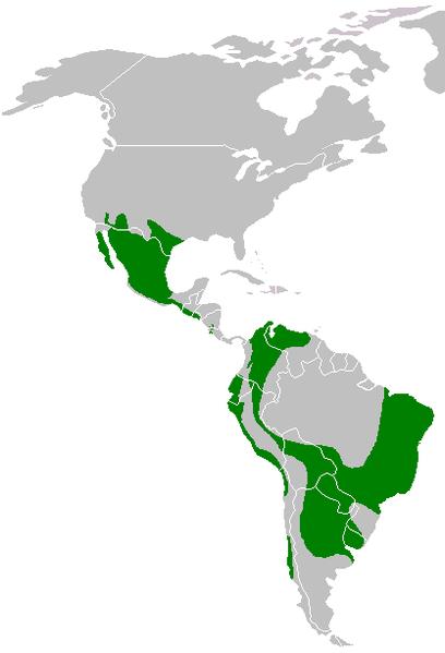 File:Parabuteo unicinctus range map.png