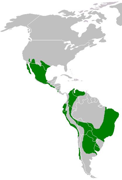 Parabuteo unicinctus range map