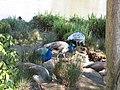 Parc Olbius Riquier - Peacocks.jpg