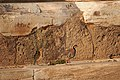 Partridge, Temple of Poseidon, Sounio, Attica.jpg