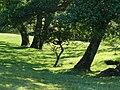Path alongside River Ure near Askrigg - geograph.org.uk - 422633.jpg