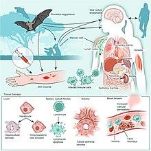 paraziták műtéti kezelése férgek okai és kezelése