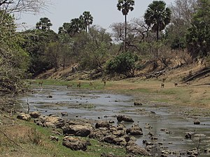Oti River - Oti River in Pendjari National Park in dry season; Benin left, Burkina Faso right