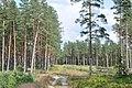 Pie Garkalnes un Ropažu novadu robežas, Garkalnes pagasts, Garkalnes novads, Latvia - panoramio.jpg