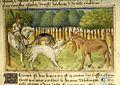 Pierpont Morgan Library-M461-013v-Bohemia-horned-dewlap-beast.jpg