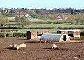 Pig Field, Lower Penn, Staffordshire - geograph.org.uk - 666795.jpg