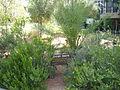 PikiWiki Israel 13844 Rina Smilansky Garden in Rehovot.JPG